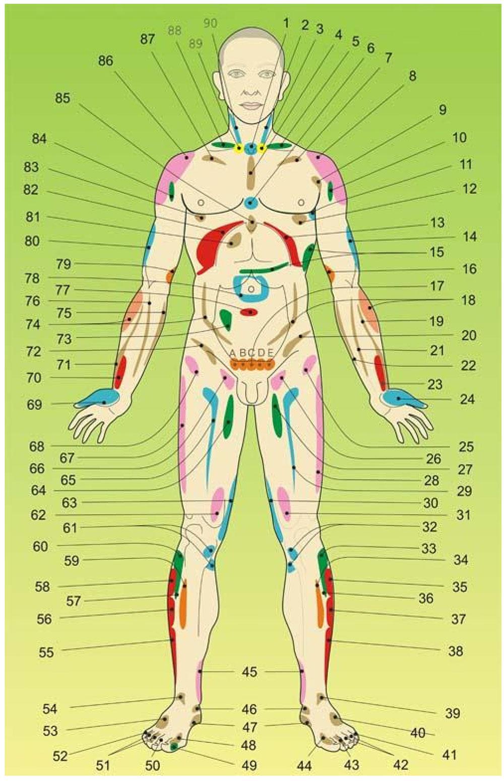 Strefy projekcyjne narządów wewnętrznych oraz niektórych zaburzeń na ciele - przód