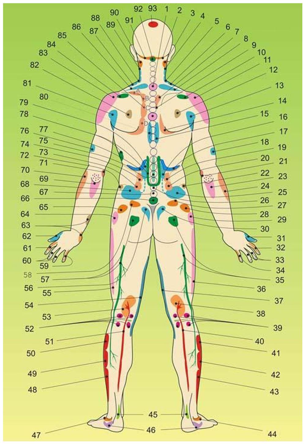 Strefy projekcyjne narządów wewnętrznych oraz niektórych zaburzeń na ciele - tył