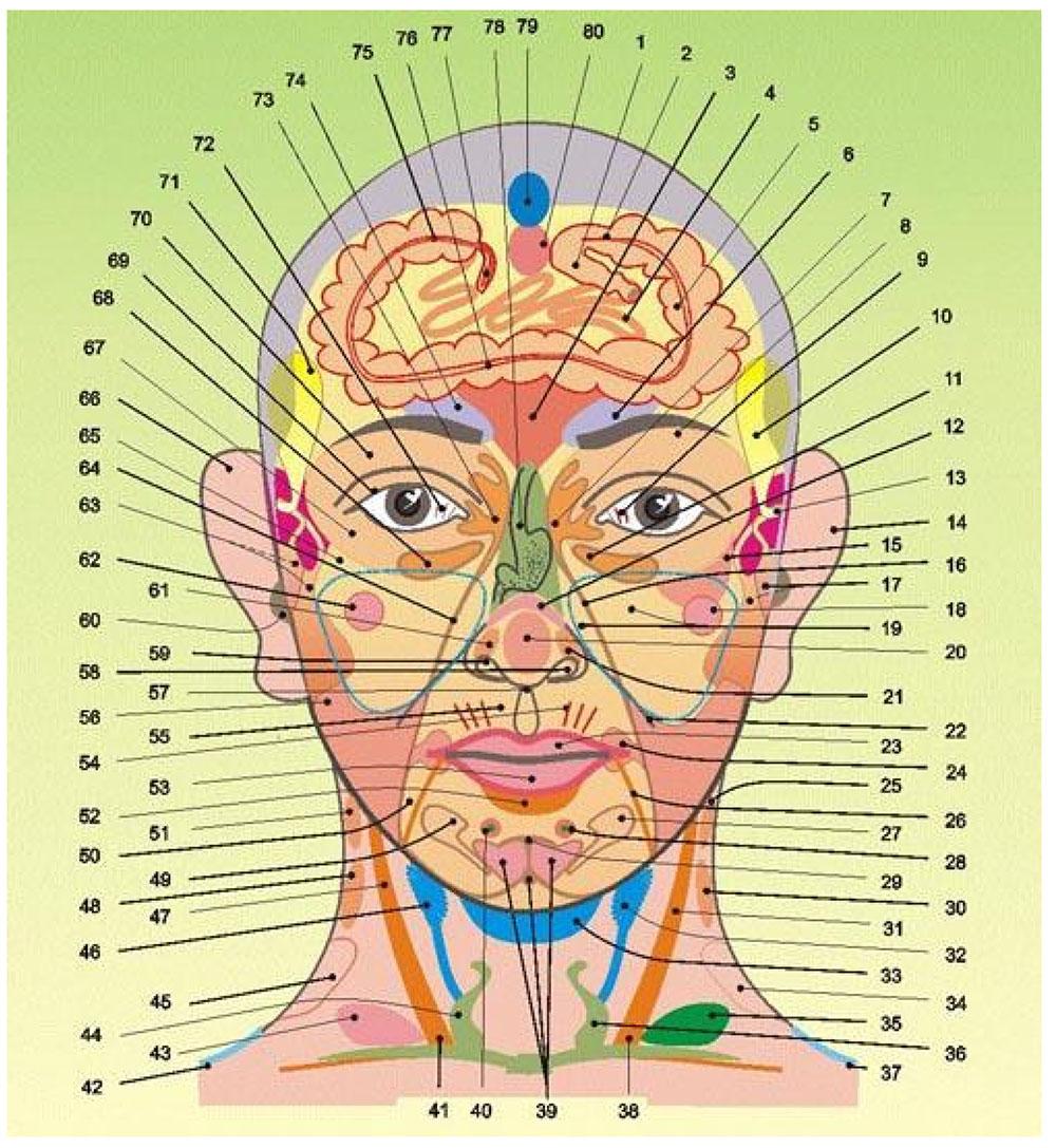 Strefy projekcyjne narządów wewnętrznych na głowie i szyi.